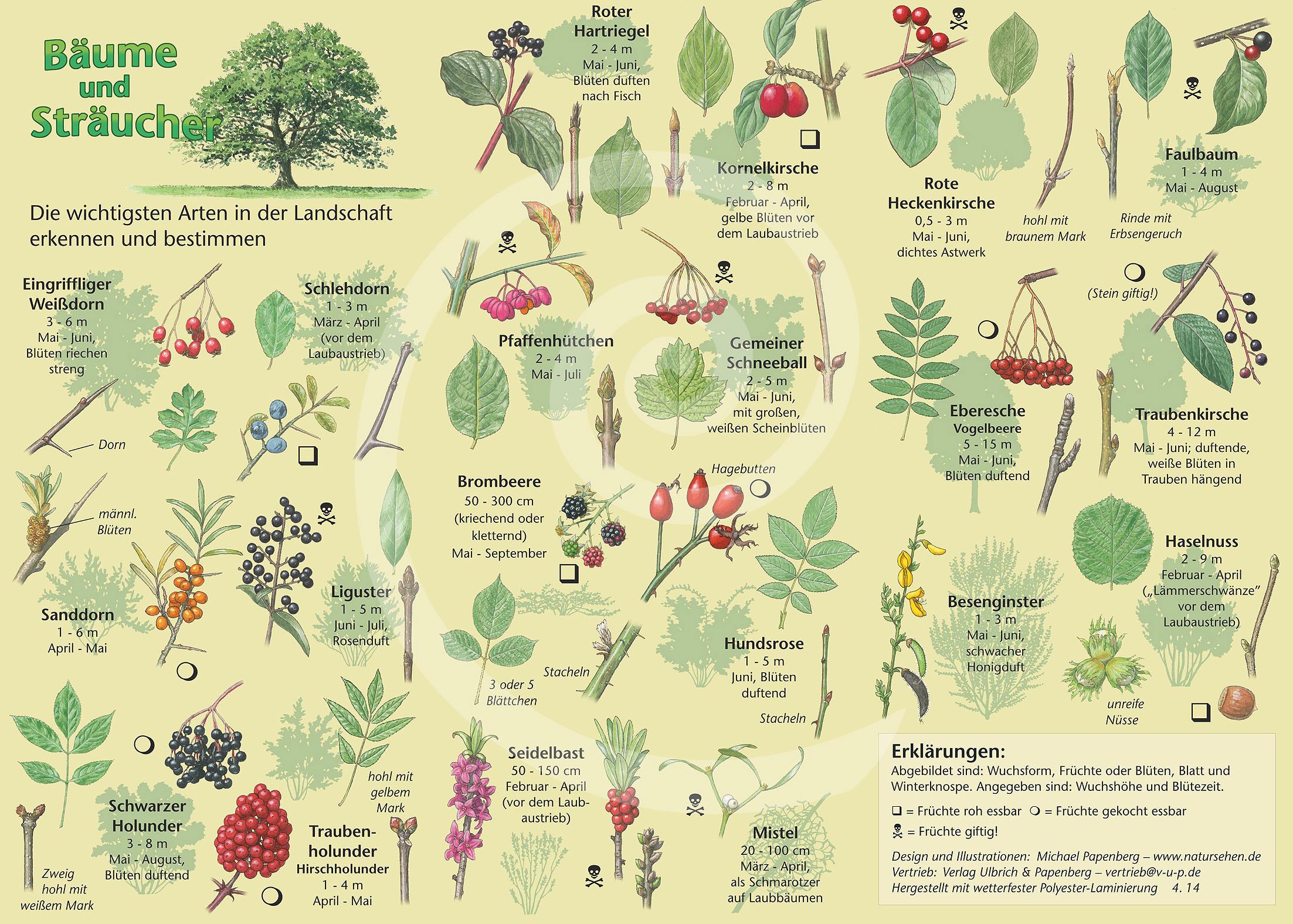 Natur Entdecken Bume Und Strucher