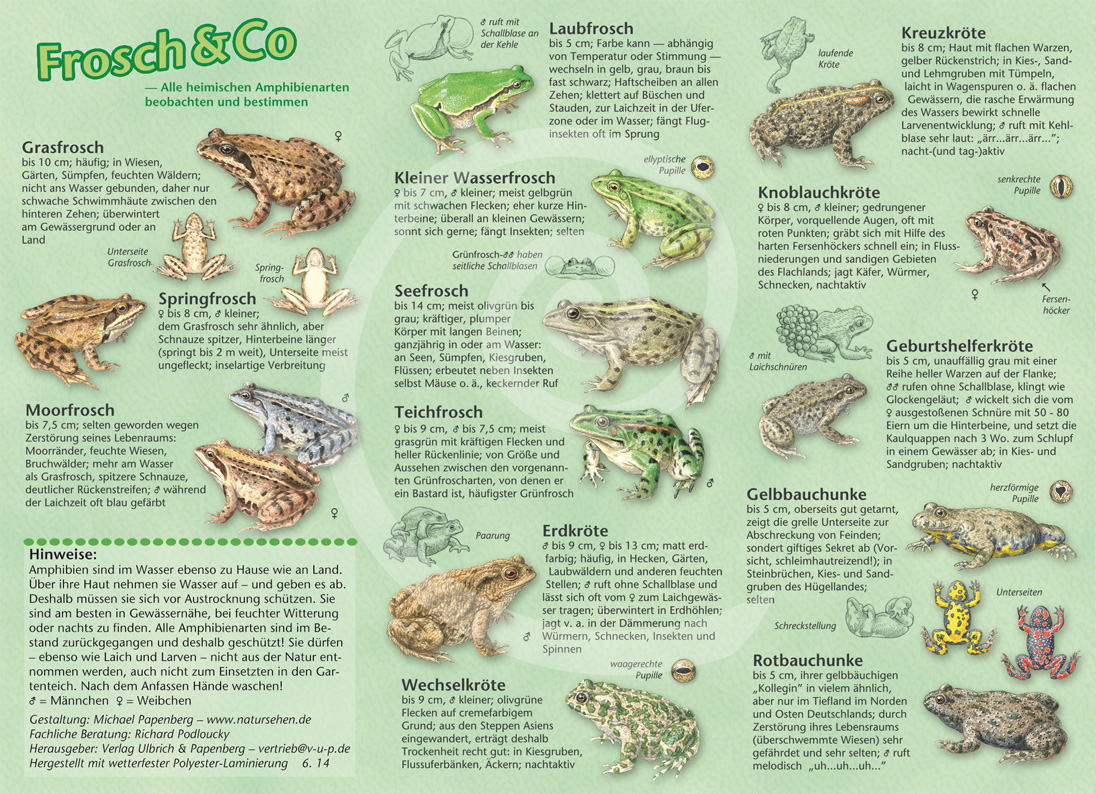 Geliebte natur entdecken - Frosch & Co &OC_54