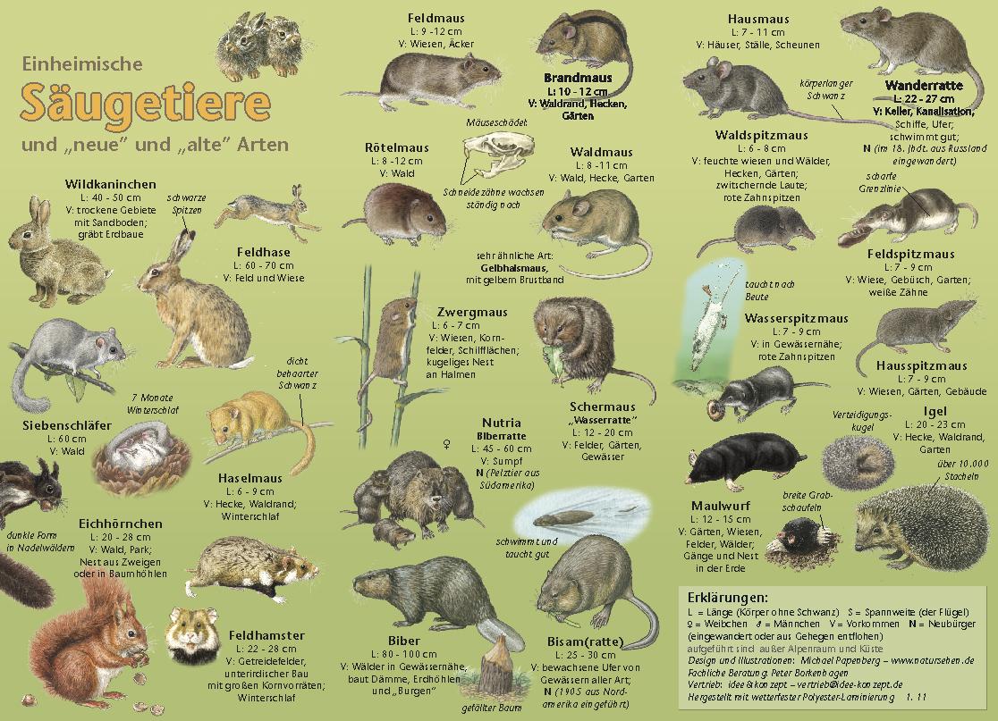 Natur Entdecken Sugetiere