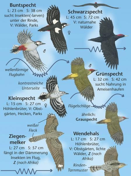 natur entdecken  vögel im flug